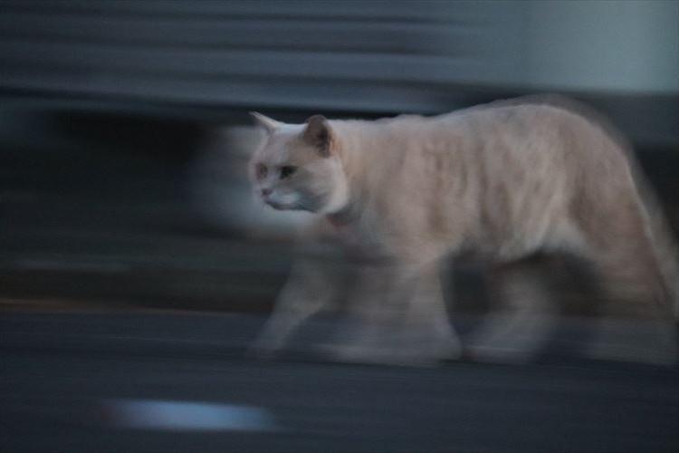 スタスタ感がハンパない!一眼レフ購入後初めて撮った猫の写真がじわじわくる