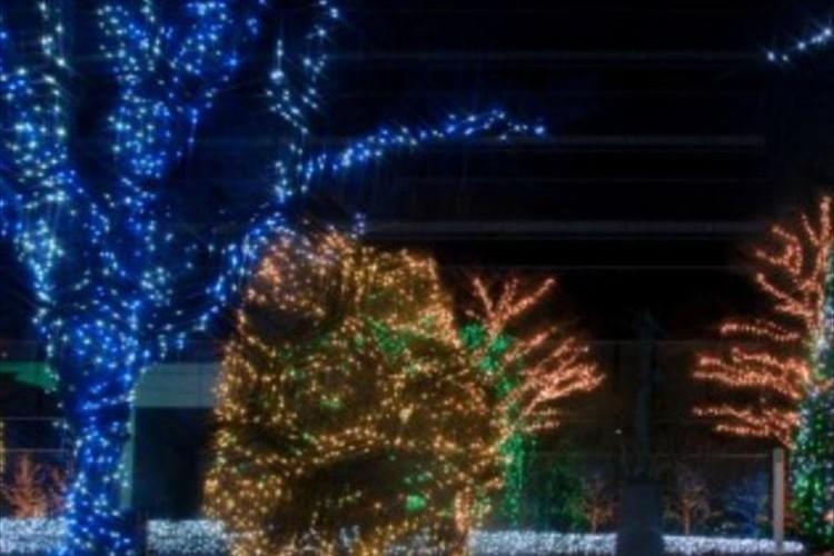「電気代32兆円です!」驚愕の請求額に→クリスマスの電飾付けすぎたかな?