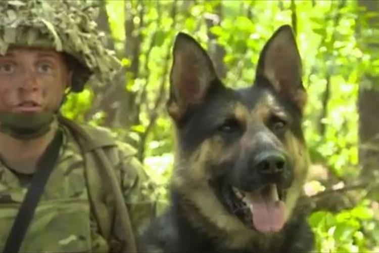 爆発物探知で活躍してきた軍用犬が引退後に殺処分決定→兵士たちの署名活動で中止へ