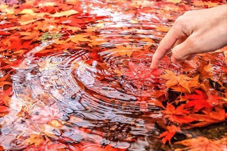 水に浮かぶ紅葉の写真をモチーフにしたレジン…再現度が凄すぎると話題に!