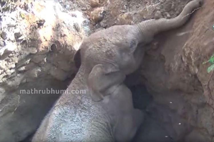 井戸に落ちた赤ちゃんゾウを現地の人々が救出!その後、大人のゾウがとった行動が話題に