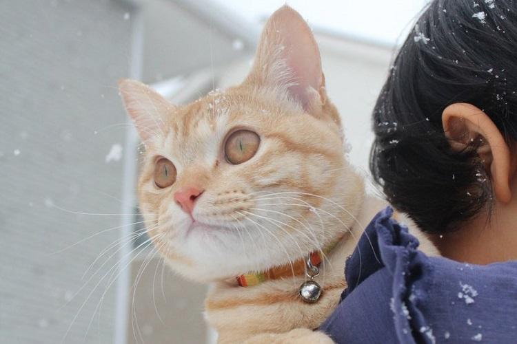 びっくり?大はしゃぎ!?雪を見た動物たちの反応【10選】