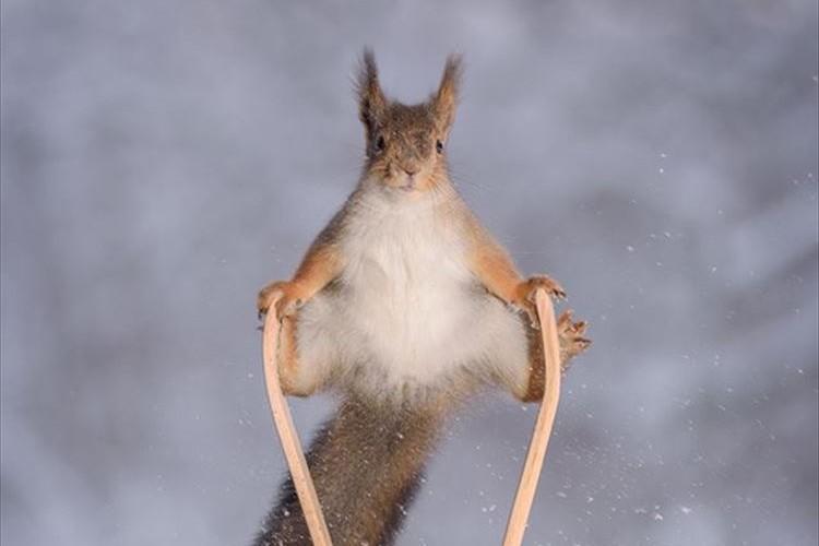 リスさんもオリンピック出場か!?スノボやスキージャンプをしている写真がめちゃ可愛い