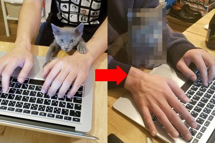 """可愛い子猫ちゃんがたった15ヶ月で""""凄腕トレーダー""""に変貌を遂げる!"""