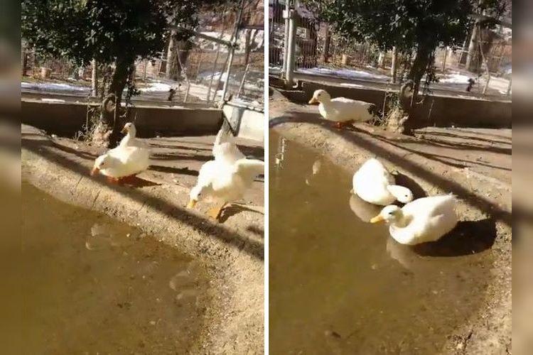 「よし、池にはいるぞぉ!」→「あれ…凍ってるじゃないかぁああ~!」