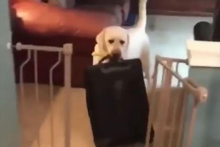 「絶対に行かせないワン!」飼い主の旅行に気づいたワンコが強攻策に出る!