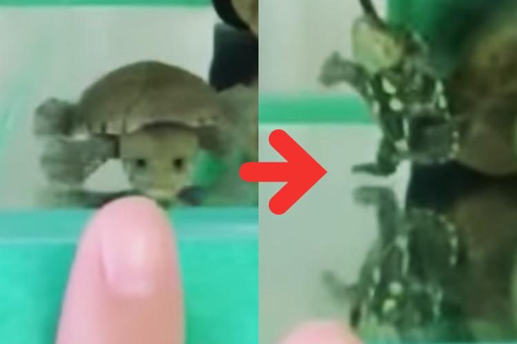 かめはめ波!?で吹き飛ばされるミニカメちゃん…無限ループで遊ぶ姿が可愛いすぎると話題!