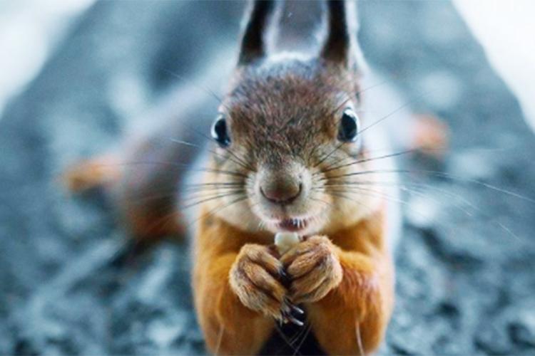 まるで絵本の中にいるような世界観…写真家ヨアヒムさんが撮影する森の動物たち