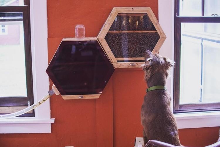 部屋の中で養蜂!?インテリアにもなっちゃうオシャレ巣箱が面白い!