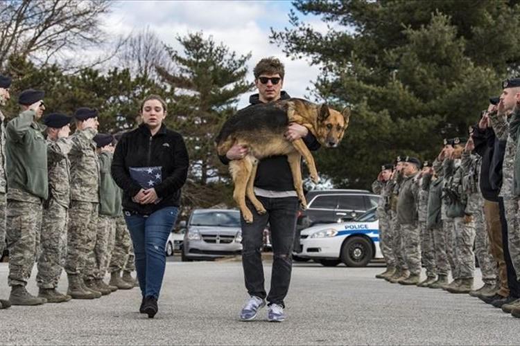 軍用犬として8年間勤めていたシェパード…闘病のため引退、仲間に見送られる