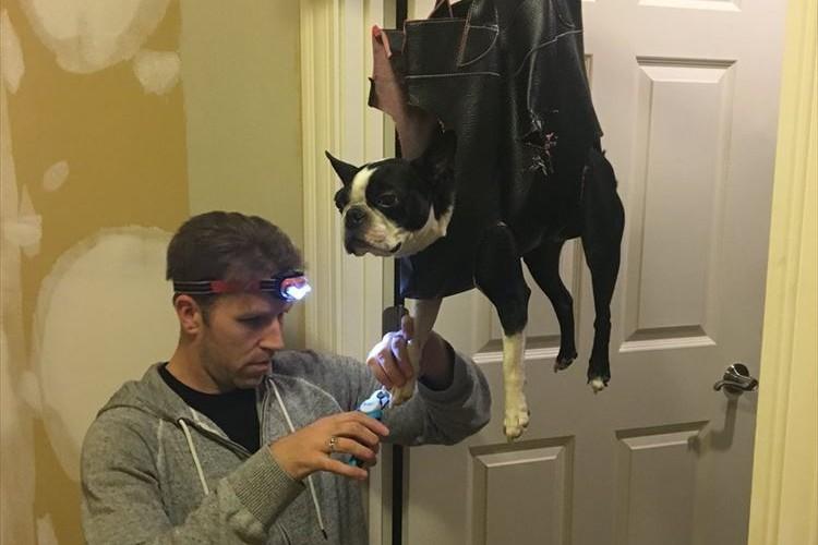 爪を切られるのが苦手な愛犬のために、パパがバッグを買ってきて穴を開けました