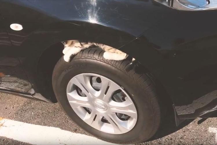 【猫バンバン】乗車前、ボンネットをコンコンと叩くだけで救える命があります!