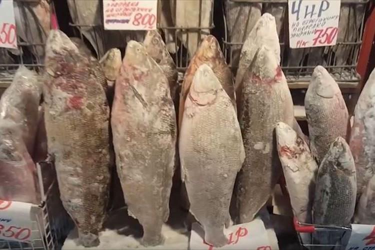 マイナス50度の魚市場の光景が異様だった…天然の冷凍庫で魚がカチンコチン!