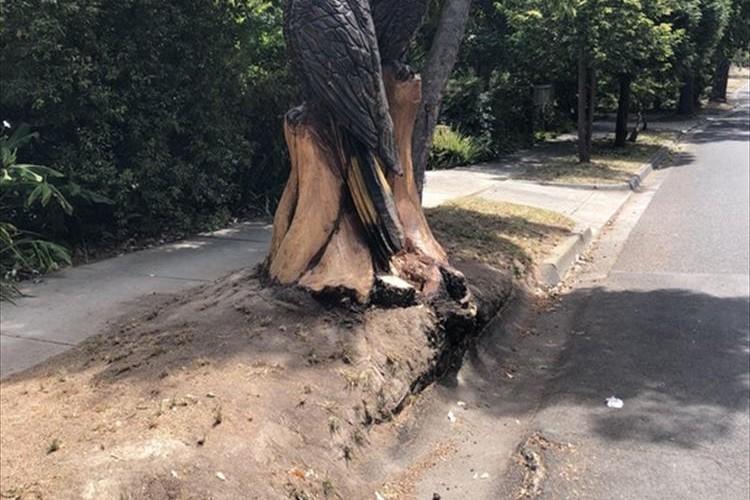 木が倒れていたから、ご近所さんが芸術作品に変身させちゃった!
