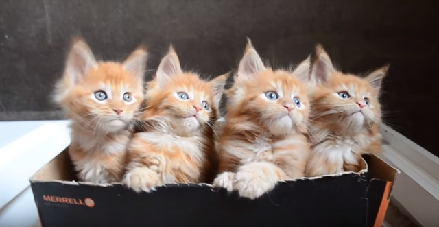 【疲労回復動画】子猫たちがシンクロする!最高に癒される動画4選+おまけ!