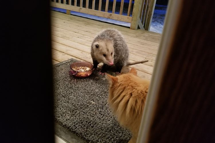 「それ私のなんだけど…」エサを食われてしまったニャンコの切ない表情が可愛すぎ