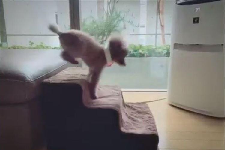 クセが強い!!ワンコの階段の登り方がアクロバティックすぎる