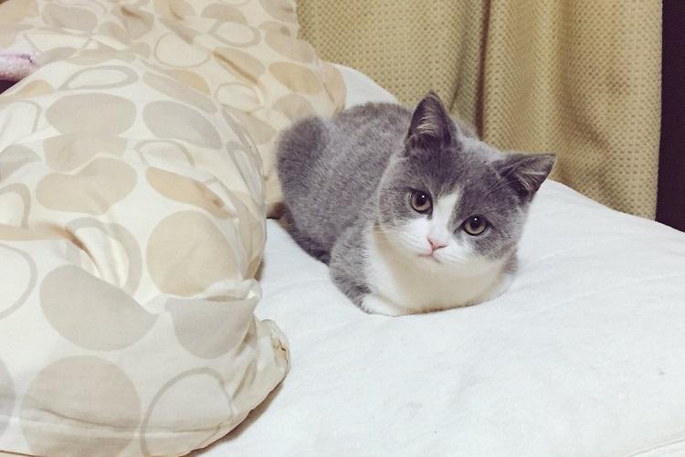 なんという可愛さ!じーっと見つめてきて急に寝てしまう子猫にもうメロメロ!