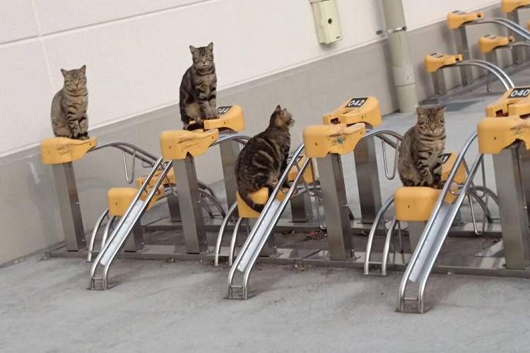 とめさせてニャるものか…!猫たちによる『駐輪させない部隊』がオモロ可愛い