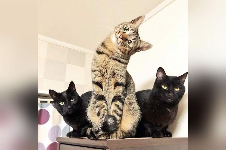 「考える猫である。」首をかしげるニャンコが爆発しそうな可愛さ【全4枚】