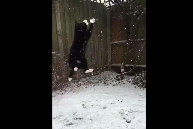 思いっきりジャンプして雪をキャッチするニャンコ!スローモーション動画に反響