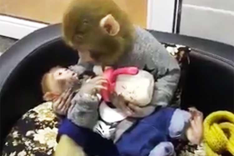 ママザルが子ザルにミルクをある姿が可愛すぎてキュン死レベル!