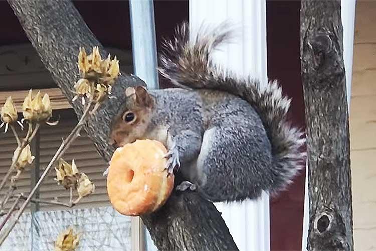 「ここなら誰にも盗られない!」木の上で必死にドーナッツを頬張るリスが可愛すぎてキュン死レベル!