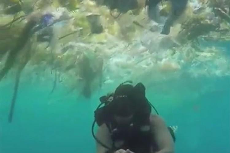 バリ島のダイビングスポットがプラスチックまみれに…海洋汚染問題が深刻