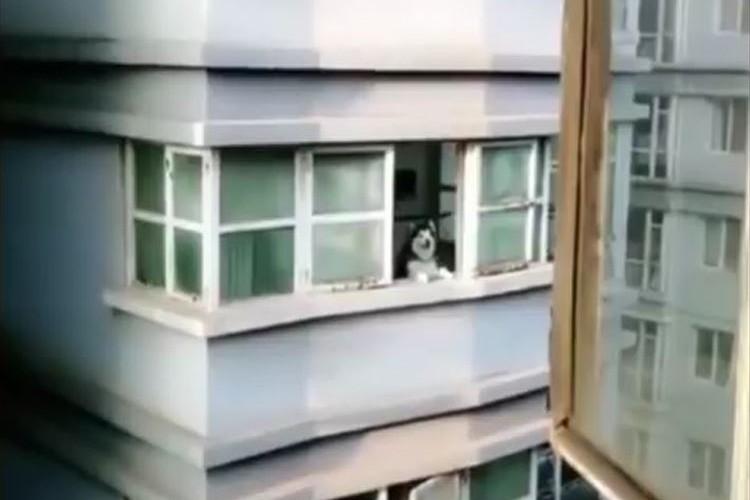 近所に住むハスキー犬に「アオーン」と呼びかけると「アオーン」と返してくれる