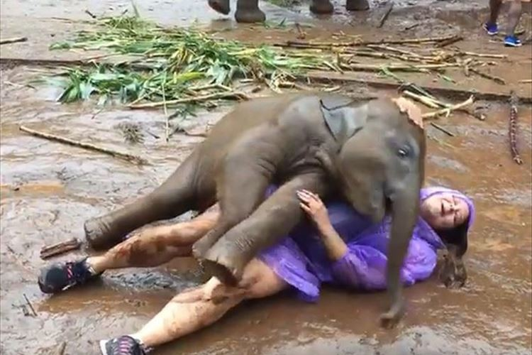 「めちゃめちゃなつかれているね」赤ちゃんゾウと戯れる女性が話題に!