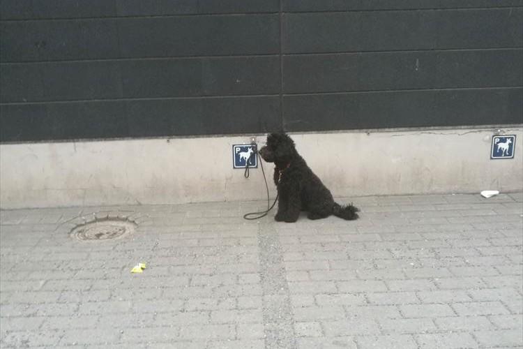 フィンランドのスーパーに設けられた犬用のパーキングスポットにさまざまな意見