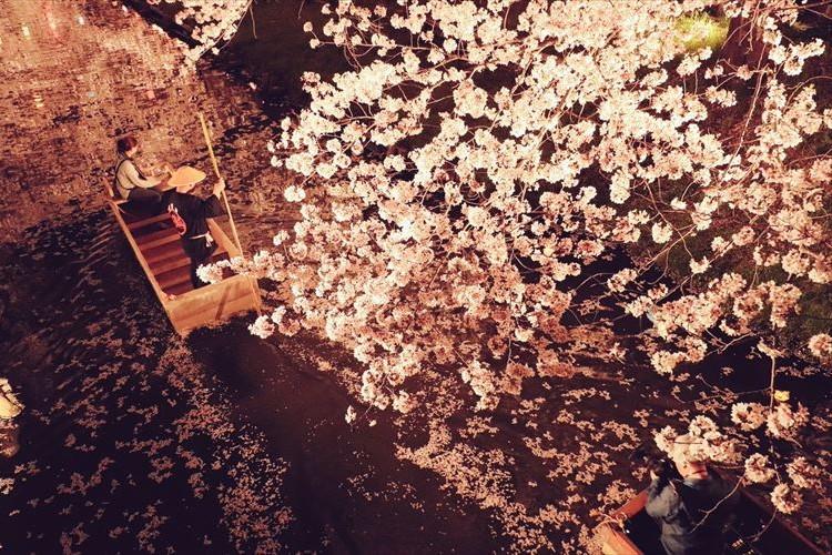 江戸の風情も感じる美しさ!川越の夜桜がめちゃくちゃキレイ