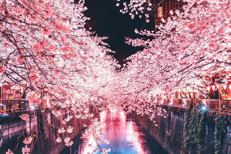 好きな人と見たいなぁ!目黒川の夜桜がハート型になっていて超ロマンチック♡