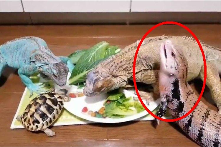 「ゴマちゃん、それどういう感情なの?(笑)」爬虫類たちの食事風景が可愛いと話題に