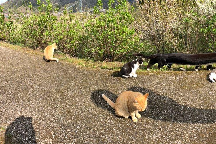 【パノラマ撮影あるある】猫ちゃんたちを撮ったら一匹が歩き出して凄いことに!