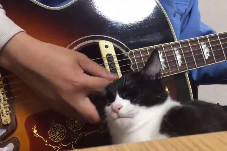 【勝ち目ゼロ】撫でて欲しいネコ VS ギターを弾きたいひと【目に見えた勝負】