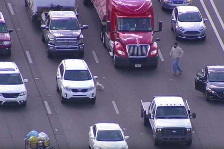 高速道路にワンコが侵入して自由奔放に動きまくった結果、道路がスゴイことに…