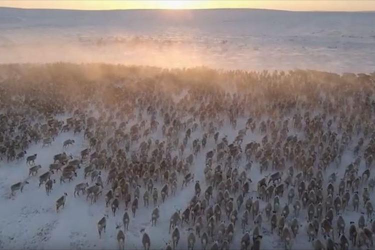 圧巻の光景…その数はなんと3000頭以上!一斉に大移動している動物は何!?