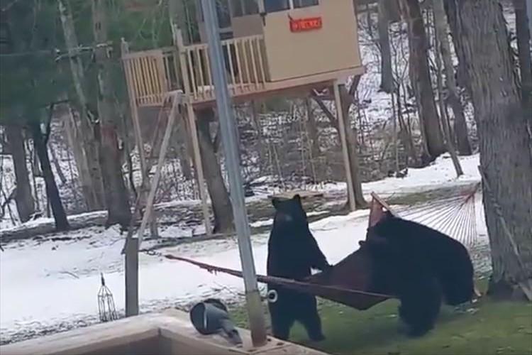 3匹のクマがハンモックでくつろごうとするも上手く乗れず…豪快にひっくり返っちゃった