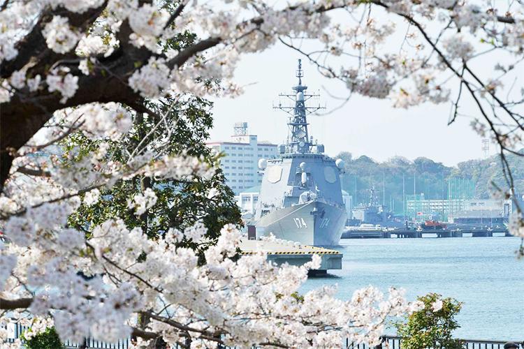 国防機と桜のコラボレーションが感無量…駐屯地イベントも開催!