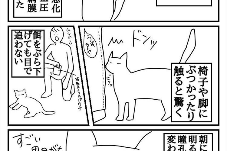 「もっと早く気付けていれば…」失明をしてしまった愛猫を描いた漫画に反響の声