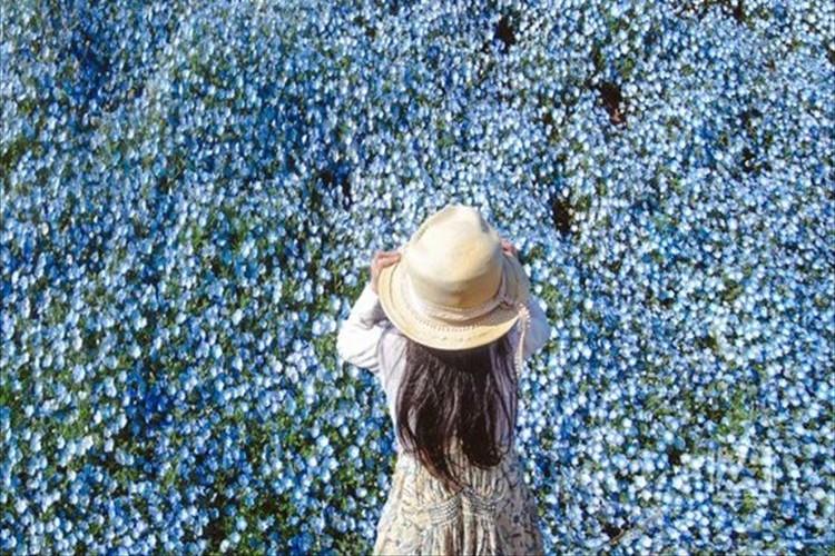 お花の地平線やぁー!超広角で撮影されたみはらしの丘の「ネモフィラ」に超感動!