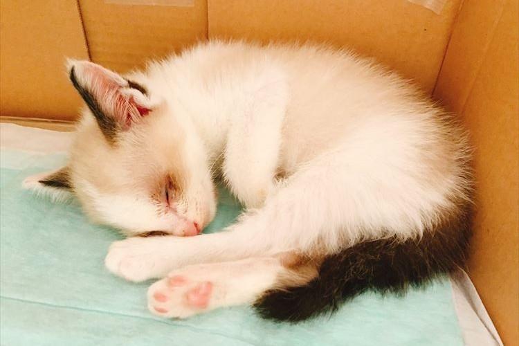 新しい家族としてやってきた保護猫を、誰よりも喜んでいたのは「同じ境遇の犬」だった