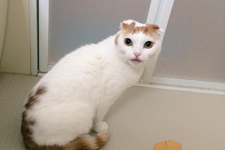 おやつで誘いこまれたお風呂場でガーン!5年ぶりのシャンプーに挑む猫さんの一部始終