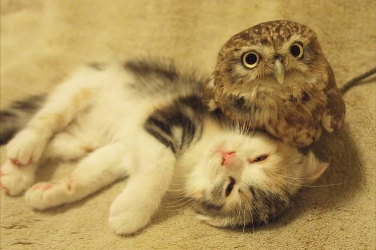 尊すぎる…3世代の猫ちゃんとフクロウのモフりあう姿が泣けるほど可愛い