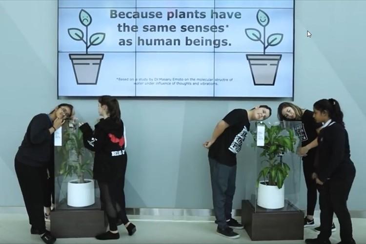 植物にも感情はある?一方に「ほめる」もう一方に「いじめる」言葉を30日間かけ続けてみた結果…