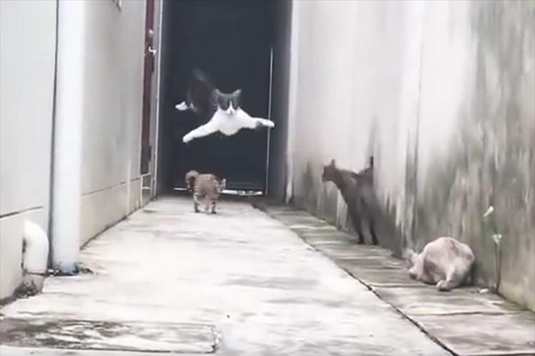 「まるで忍者のようだ」4匹のニャンコの躍動感、連動した動きがスゴイ!