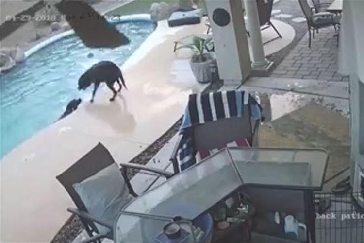2匹の飼い犬がびしょ濡れに…不思議に思った飼い主が監視カメラの映像を確認→感動的な出来事が!