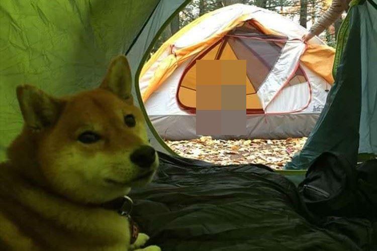 キャンプ場でワンコが運命の出会い!?その瞬間をとらえた1枚の写真が話題に