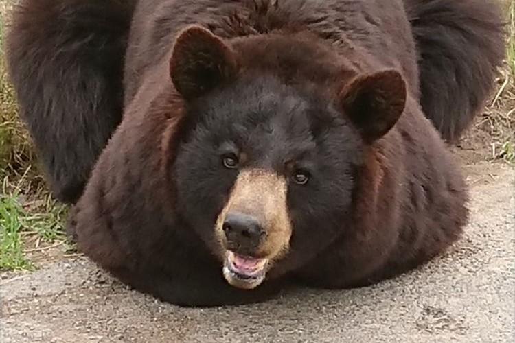 ちょっとどうなっているの!?未確認生物みたいな座り方をするクマが可愛すぎ!